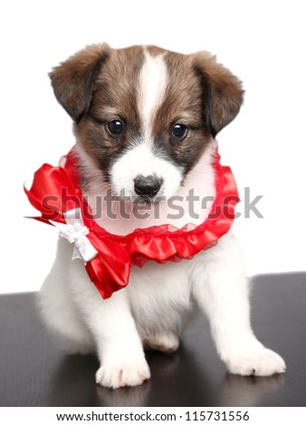 small puppy with a red bow