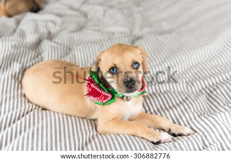 Small Puppy with Green and Red Christmas Bow
