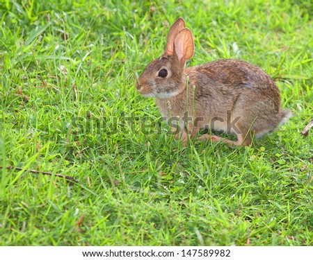 Small rabbit that looks frightened on the grass