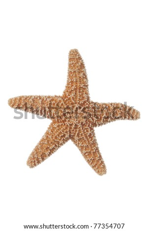 Small Real Starfish on a white background - stock photo