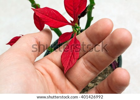 small red flower in fingers - stock photo