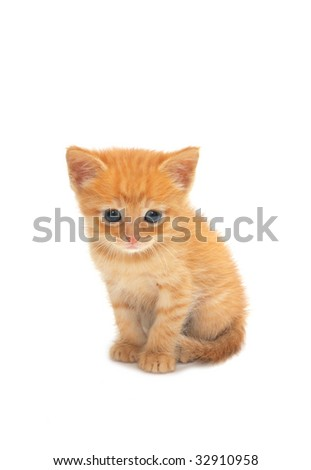 Small red kitten on a white background
