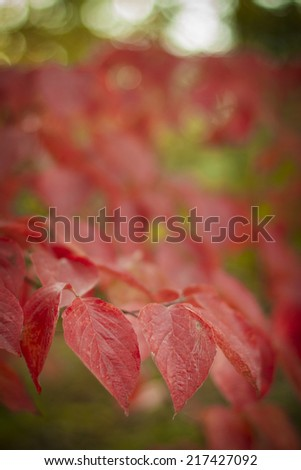 Small red leaves in autumn, - stock photo