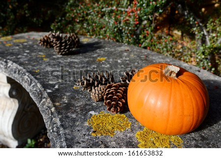 Small ripe pumpkin and fir cones on a stone bench with selective focus - stock photo