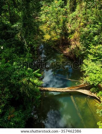 Small river in jungle borneo malaysia - stock photo