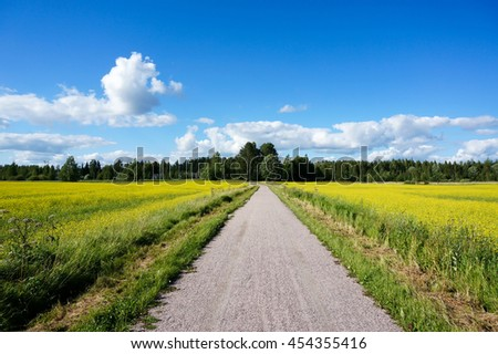 Small road between field of bright yellow rapeseed in summer. Rapeseed (Brassica napus), also known as rape, oilseed rape, rapa, rappi, rapaseed. Finland