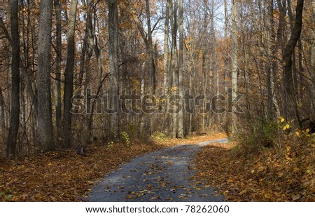 small road in a Virginia forest in the fall