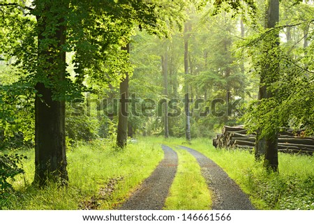 Small Road through Sunlit Foggy Beech Tree Forest  - stock photo