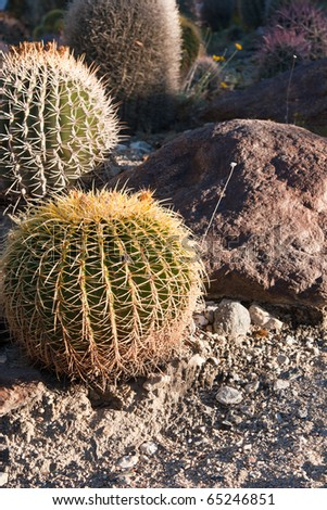 Small round cacti with rocks and sand - stock photo
