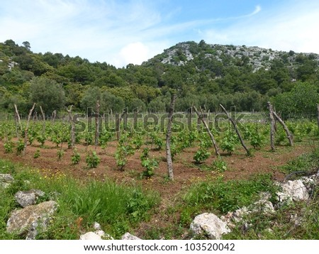 Small scale agriculture at the Croatian island Lastovo