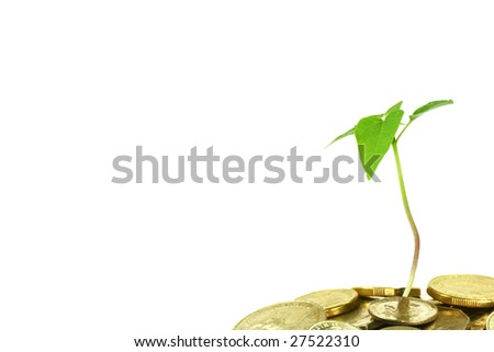 small seedling growing in a pile of money