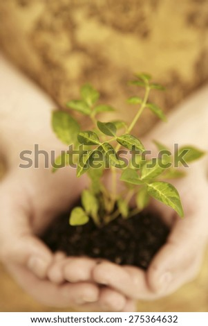 Small seedling growing in hands - stock photo