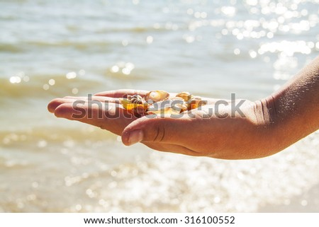 small shells in the palm of the sea