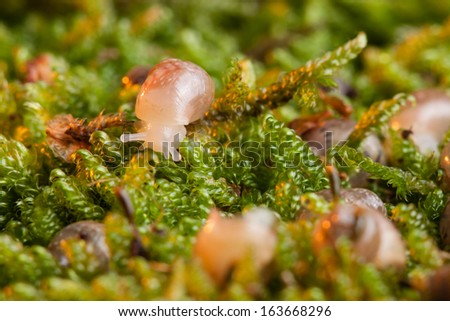Small snail in moss - stock photo