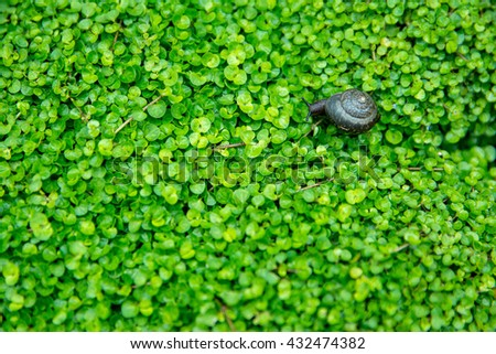 Small snail in the garden on bead plant background - stock photo
