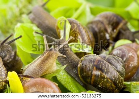 Small snails springs macro background.  Selective focus. - stock photo