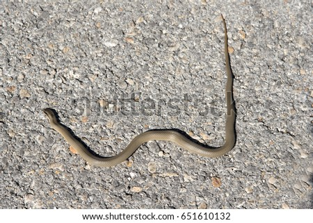 Small snake