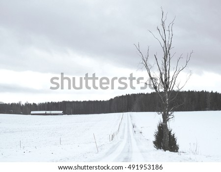 Small snowy road with a tree