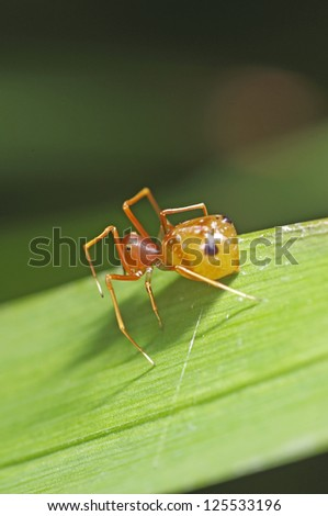 small spider is standing on the grass leaf