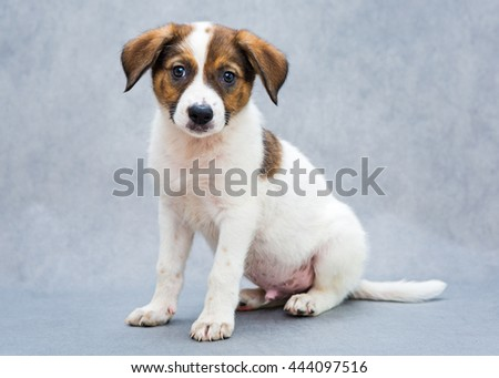 Small, spotted puppy, white and red color