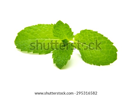 small sprig of mint isolated on white background - stock photo