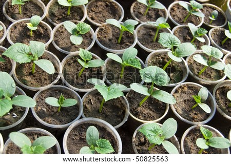 Small sprouts of soy - stock photo