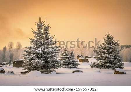 small spruces in snowy park - stock photo