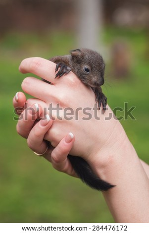 small squirrel in human hand closeup - stock photo