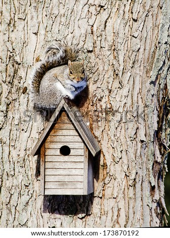 Small squirrel sitting on top of birdhouse on tree - stock photo