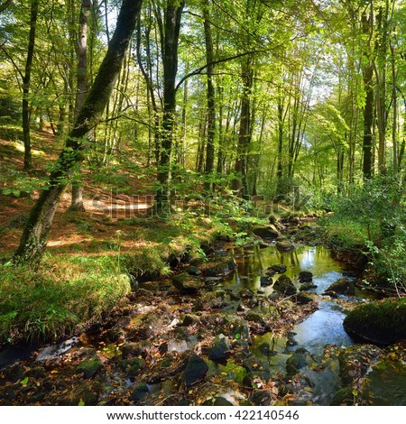 Small stream in a green deciduous forest - stock photo
