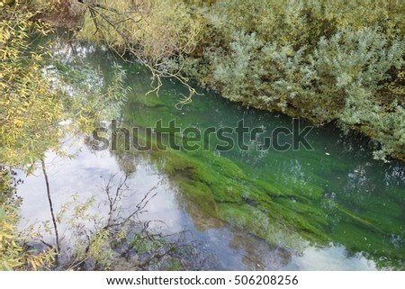 small stream with underwater plants