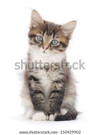 Small striped kitten on a white background - stock photo