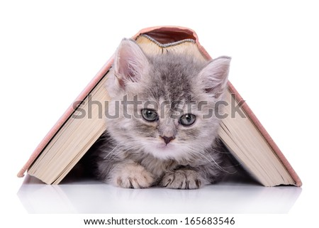 small striped kitten Scottish tabby breed. animal sitting with a book  isolated on white background - stock photo
