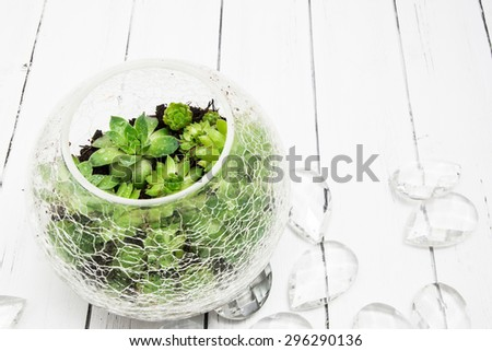 Small succulents in glass crack vase  with glass decorations on a white wooden background - stock photo