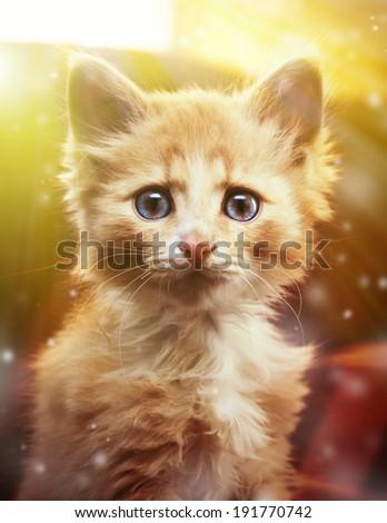 Small surprised kitten looking forward. - stock photo