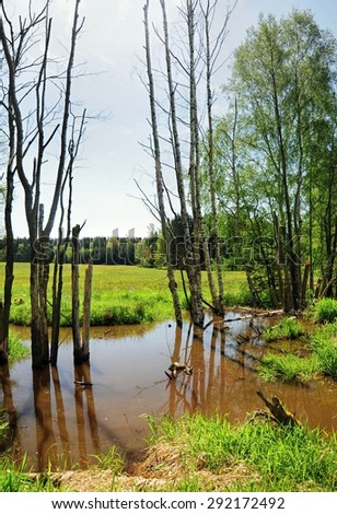 Small swamp on the edge of spring green meadow - stock photo