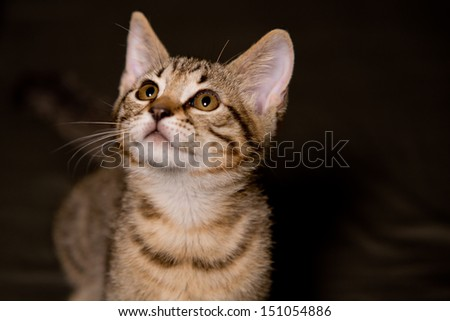 Small tabby cat in funny position