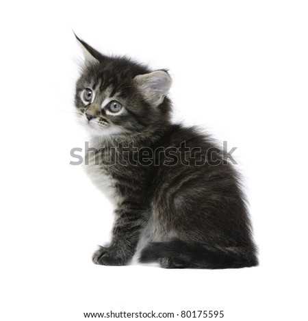 Small tabby kitten isolated on white background - stock photo