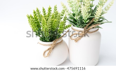 Small teeny green tree succulent plant in white pot. Concept of minimalist decoration. Isolated on white background. Slightly de-focused and close-up shot. Copy space.