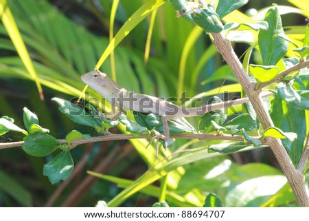 small thai lizard on tree branch with green leaves background - stock photo