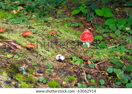 Small toadstool and few brown mushrooms - stock photo