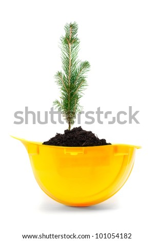 Small tree growing in a yellow hard hat. - stock photo
