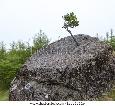 Small tree growing on a boulder. Conceptual for empowerment, power, success, growth, courage - stock photo