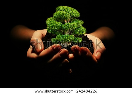 Small tree in hands isolated on black - stock photo
