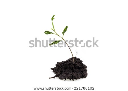 Small tree on a white background - stock photo