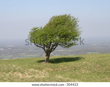 Small tree on hill