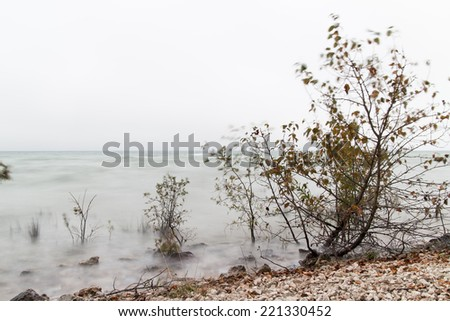 Small trees on a beach, with motion blur in the leaves & water from the wind.  Mackinac Island, MI, USA. - stock photo
