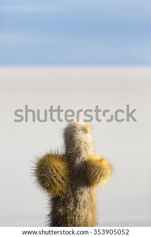 Small Trichoreus cactus standing on Isla Incahuasi (Isla del Pescado) in the middle of the world's biggest salt plain Salar de Uyuni, the Island is covered with cactus. Bolivia - stock photo