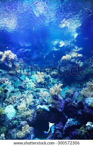 Small tropical fish on a coral reef - stock photo