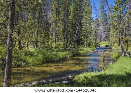 Small trout stream in forest among Idaho mountains - stock photo